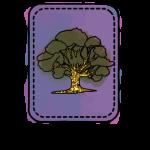 About Tarot Oak